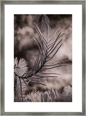 Florida Flora 1 Framed Print