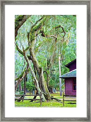 Florida Green Framed Print by Janal Koenig