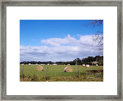 Framed Print featuring the photograph Florida Hay Rolls by D Hackett