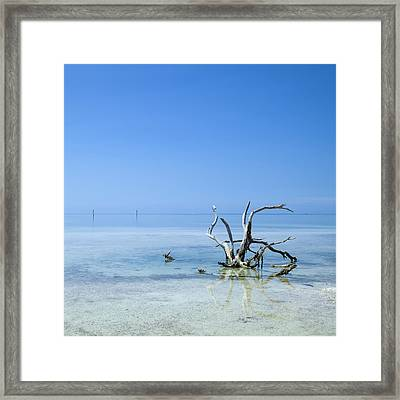 Florida Keys Lonely Root Framed Print by Melanie Viola