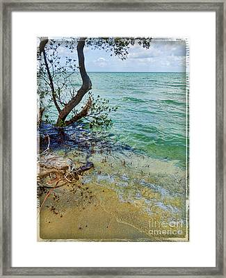 Florida Keys Tropical Island Framed Print by Joan  Minchak