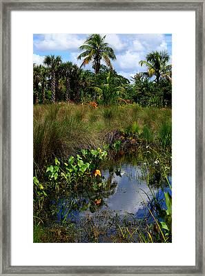 Florida Lagoon Framed Print by Joseph G Holland
