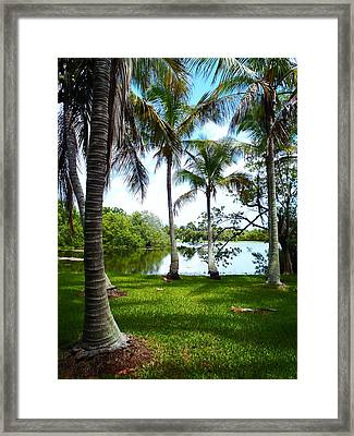 Florida Lake Framed Print