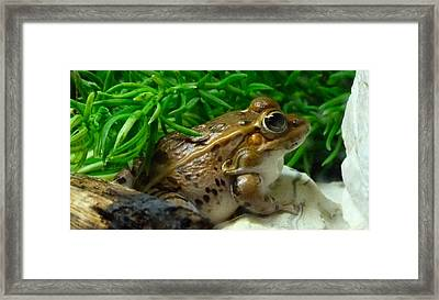 Florida Leopard Frog Framed Print by Richard Bryce and Family