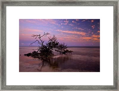 Florida Mangrove Sunset Framed Print by Mike  Dawson