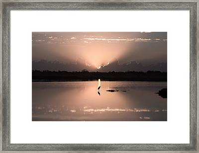 Florida Morning Photograph - A Blue Heron Sunrise- Version Two Framed Print by Bill Swindaman