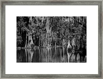 Florida Naturally 2 - Bw Framed Print
