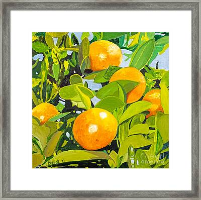 Florida Orange Grove By Stan Bialick Framed Print
