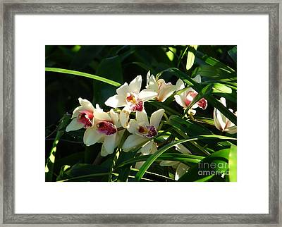 Florida Orchids Framed Print by Lew Davis