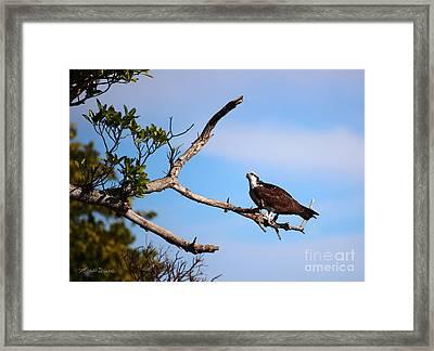 Florida Osprey Having Breakfast Framed Print by Michelle Wiarda