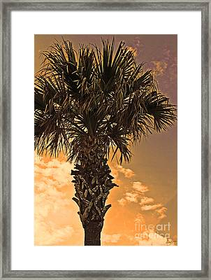 Florida Palm Framed Print