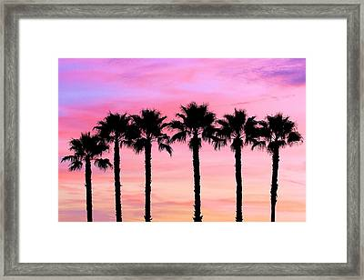 Florida Palm Trees Framed Print