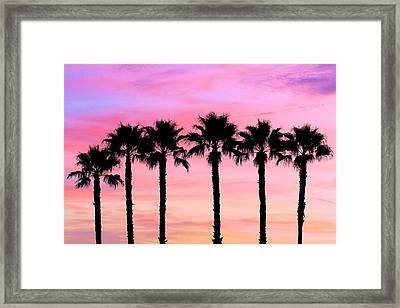 Florida Palm Trees Framed Print by Elizabeth Budd
