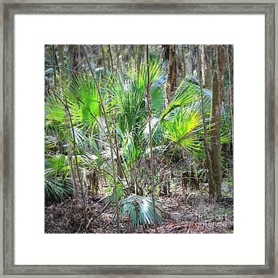 Florida Palmetto Bush Framed Print by Carol Groenen
