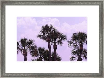 Florida Palms Framed Print by John Wartman