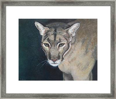 Florida Panther Framed Print by Sharon Guy