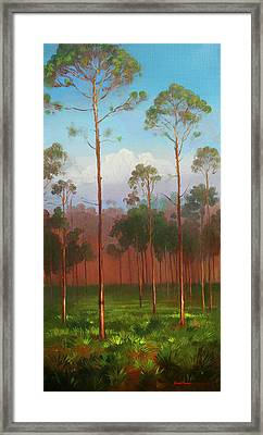 Florida Pines Framed Print by Keith Gunderson