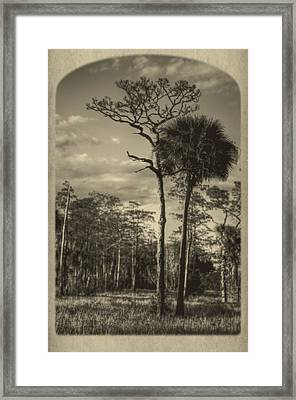 Florida Postcard Framed Print by Debra and Dave Vanderlaan