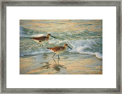 Florida Sandpiper Dawn Framed Print