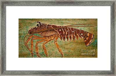 Florida Spiny Lobster Framed Print by Susan Cliett