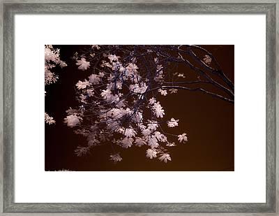 Florida Spring Framed Print by Ellie Perla