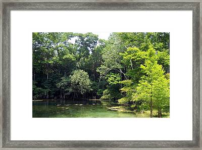 Florida Springs Framed Print