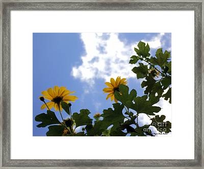 Framed Print featuring the photograph Florida Sunshine1 by Megan Dirsa-DuBois