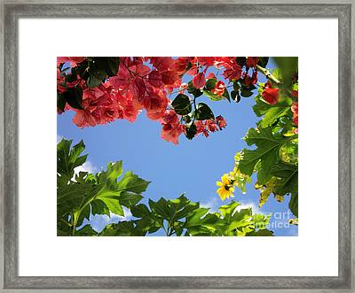 Framed Print featuring the photograph Florida Sunshine2 by Megan Dirsa-DuBois