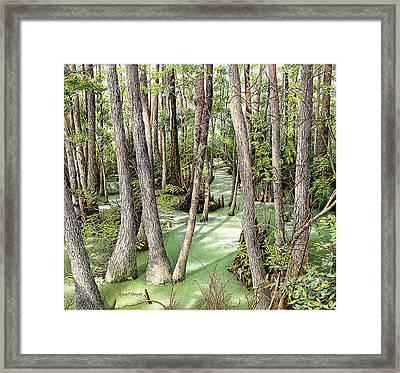 Florida Swamp Framed Print