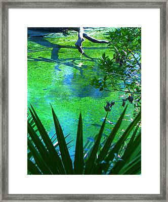 Florida Swamp With Driftwood Framed Print by Jp Grace