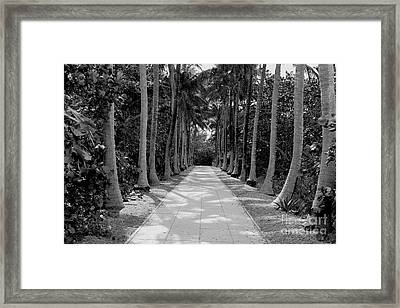 Florida Walkway Black And White Framed Print by Carey Chen