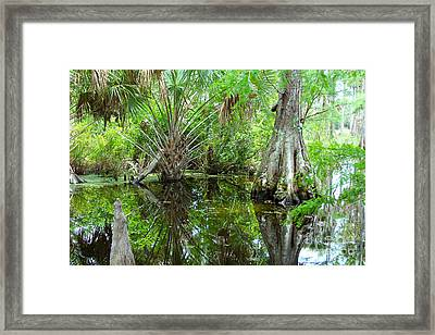 Florida Wetland Framed Print by Carey Chen