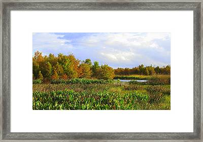 Florida Wetlands August Framed Print