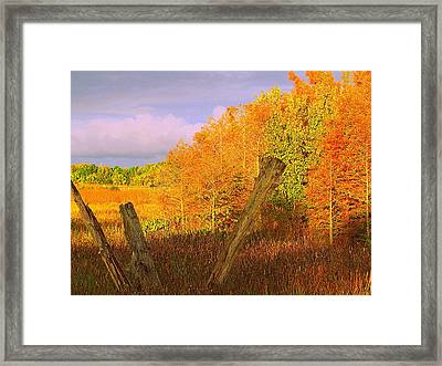 Florida Wetlands  Framed Print by David Mckinney