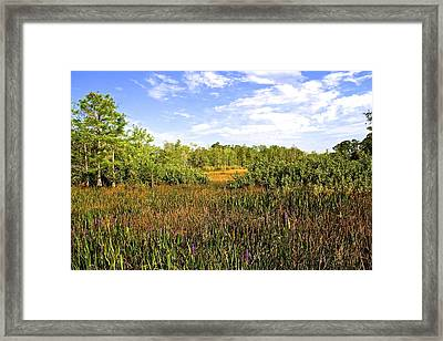 Florida Wetlands Framed Print