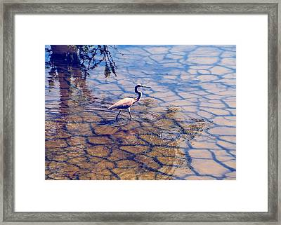 Florida Wetlands Wading Heron Framed Print by David Mckinney