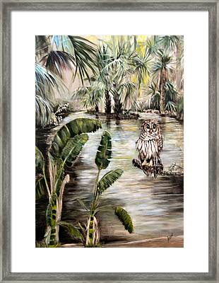 Florida's Barred Owl Framed Print