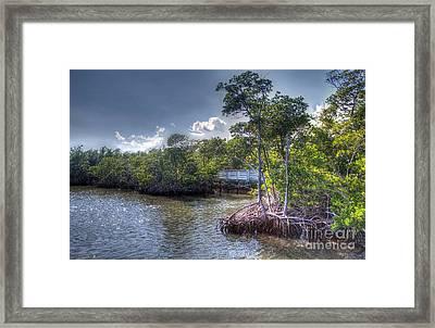 Florida's Dawn Framed Print by Ines Bolasini