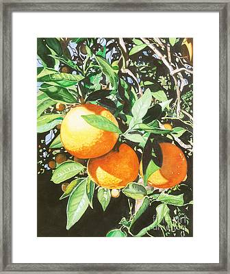 Florida's Finest Framed Print by Barbara Jewell