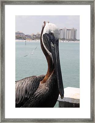 Framed Print featuring the photograph Florida's Finest Bird by David Nicholls