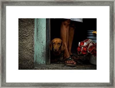Florist's Dog Framed Print