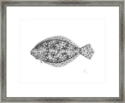 Flounder - Scientific Framed Print