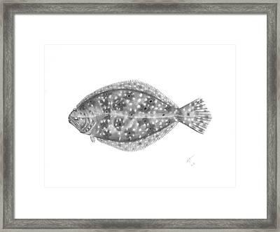 Flounder - Scientific Framed Print