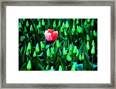 Flourish Framed Print by Benjamin Yeager