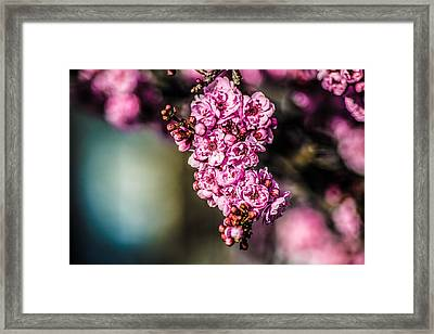 Framed Print featuring the photograph Flourishing In Pink by Naomi Burgess