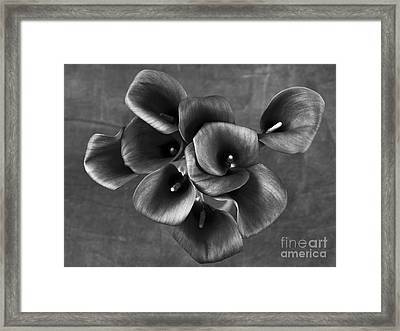 Flower #248 Framed Print