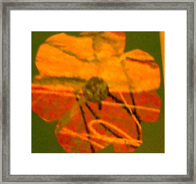 Flower 1 Framed Print by Dorothy Rafferty