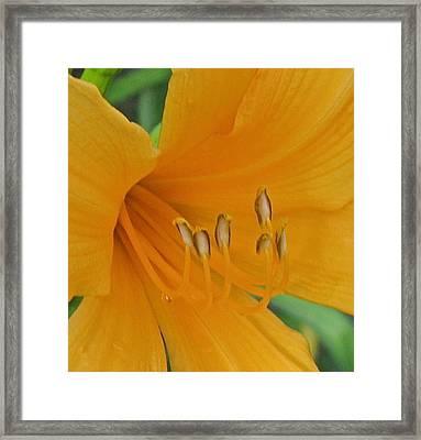 Flower 102 Framed Print by Patsy Pratt
