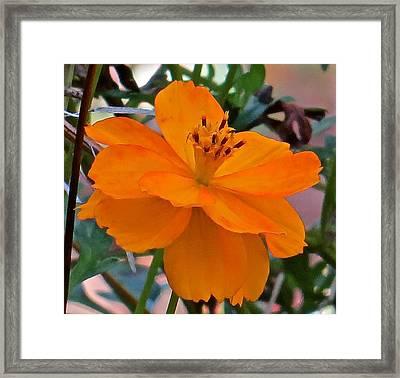 Flower 115 Framed Print by Patsy Pratt