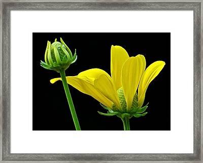Flower 119 Framed Print by Patsy Pratt